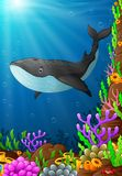 Illustration of under the sea. Illustration of whale under the sea Royalty Free Stock Photography
