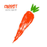 Illustration végétale esquissée de carotte Image stock