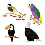 Illustration of the varied birds Stock Photography