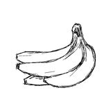 Illustration vector doodle hand drawn of sketch banana Royalty Free Stock Image