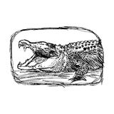 Illustration vector doodle hand drawn of sketch  crocodile openi Royalty Free Stock Image