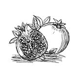Illustration vector doodle hand drawn of sketch pomegranate isol Royalty Free Stock Photo