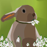 Illustration Vector Graphic Rabbit eating snowdrop Stock Photos