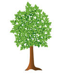 Illustration - vector green tree. Vector illustration - isolated green tree Stock Photos