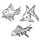 Illustration vector hand draw doodles of gold fish set isolated Royalty Free Stock Image