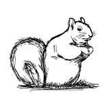 Illustration vector hand draw doodles of squirrel isolated on wh Royalty Free Stock Photography