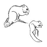 Illustration vector hand drawn of  African bush squirrel isolate Royalty Free Stock Image
