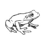Illustration vector hand drawn doodle frog  on white Stock Images