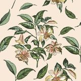Illustration  with vector hand drawn flowers in vintage Victorian Royalty Free Stock Photos