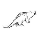 Illustration vector hand drawn sketch of African Clawless Otter Royalty Free Stock Image