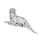 Illustration vector hand drawn sketch of African Clawless Otter Royalty Free Stock Photos