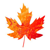 Illustration of vector maple leaf in grunge style Royalty Free Stock Images