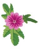 Illustration of vector mauve flower malva. Vector illustration of mauve flower malva Stock Photography