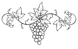 Vector ornament with the vine Royalty Free Stock Photo