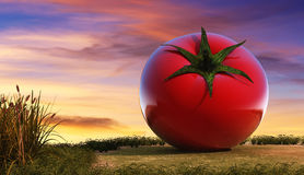 Illustration of vegetable, tomato Stock Image