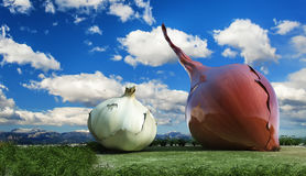Illustration of vegetables Stock Photography