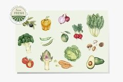 Illustration of veggies drawing style Royalty Free Stock Images