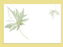 Illustration verte de vecteur d'aquarelle de feuille Photographie stock libre de droits