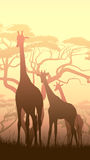 Illustration verticale des girafes sauvages dans la savane africaine de coucher du soleil Images libres de droits