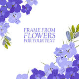 Illustration with violet flowers, delphinium. On white background Royalty Free Stock Images