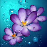 Illustration of violet lotuses Stock Photography