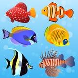 Illustration of Volitan Lionfish Royalty Free Stock Photography
