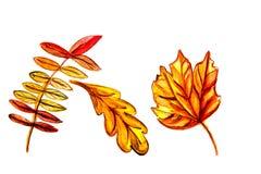 Illustration von Blättern der Eberesche, Ahorn Lizenzfreie Stockfotografie
