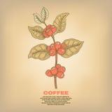 Illustration von Kaffeeanlagen Stockfotografie