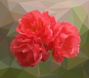 Illustration von Rosen lizenzfreie abbildung