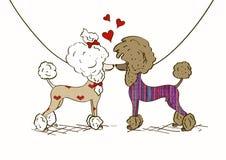 Illustration von zwei Liebhaber Pudelhunden Lizenzfreies Stockfoto