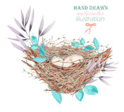 Illustration of the watercolor bird nests with eggs, hand drawn isolated on a white background. Illustration of the watercolor bird nests with eggs, in plants Stock Photo