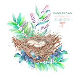 Illustration of the watercolor bird nests with eggs, hand drawn  on a white background Stock Images