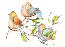 Illustration of the watercolor birds on the tree branches, hand drawn on a white background Stock Image