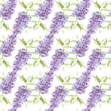 Illustration in watercolor of a Lilac flower. Floral card with flowers. Botanical illustration seamless pattern. Stock Image