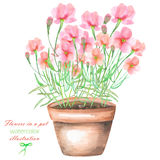An illustration with the watercolor pink flowers in a pot Stock Image