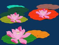 Illustration of waterscape with three lotus flowers Stock Image