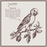 Illustration wavy parrot on brunch fo pet shop Stock Image