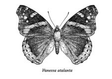 Red admiral butterfly illustration, drawing, engraving, ink, line art, vector royalty free illustration