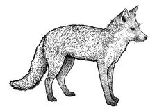 Fox illustration, drawing, engraving, ink, line art, vector. Illustration, what made by ink and pencil, then it was digitalized Royalty Free Stock Images
