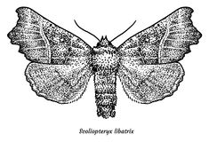 The Herald moth illustration, drawing, engraving, ink, line art, vector. Illustration, what made by ink and pencil, then it was digitalized Royalty Free Stock Photo