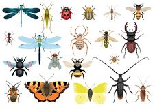 Insect, bug, butterfly collection, illustration, drawing, vector. Illustration, what made by ink and pencil, then it was digitalized Stock Photography