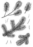 Pine branch illustration, drawing, engraving, ink, line art, vector. Illustration, what made by ink and pencil, then it was digitalized Royalty Free Stock Photos