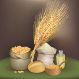 Illustration with wheat foodstuff. There are sack with wheat grains, flour, one bread, oil bottle, and wheat ears Stock Image