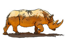 Illustration of a white rhinoceros. Walking on white background Stock Photos