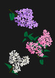 Illustration of white, rose and purple Lila Stock Photos