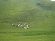Illustration of white sheep on the green hill. Screen saver royalty free stock photo