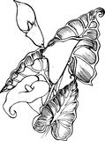 Illustration of white spathiphyllum. A symbol of beauty and refinement. Magic flower Royalty Free Stock Image