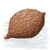 False durian nut whole Royalty Free Stock Photos