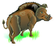 Illustration of wild boar. Vector cartoon image. Scale to any size without loss of resolution Stock Image