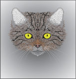 Illustration of the wild cat Felis silvestris. Vector illustration of a wild cat Felis silvestris. Excelent for a print on t-shirt Royalty Free Stock Photos
